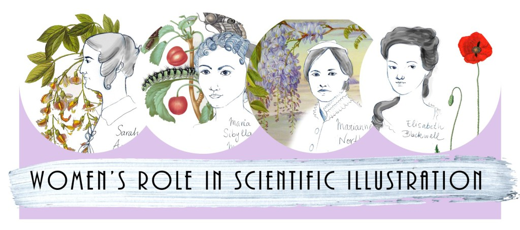 Women Scientific Illustration